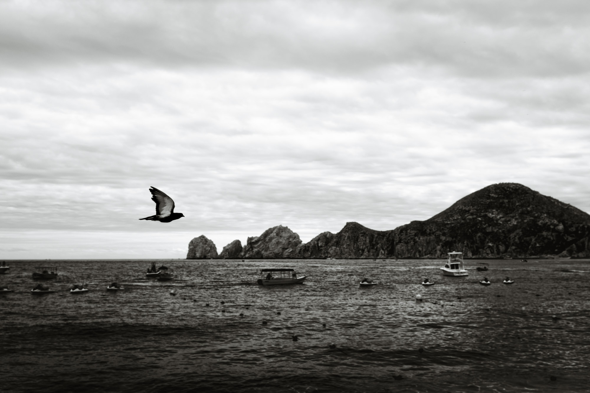 A single bird flies over the ocean in Cabo San Lucas