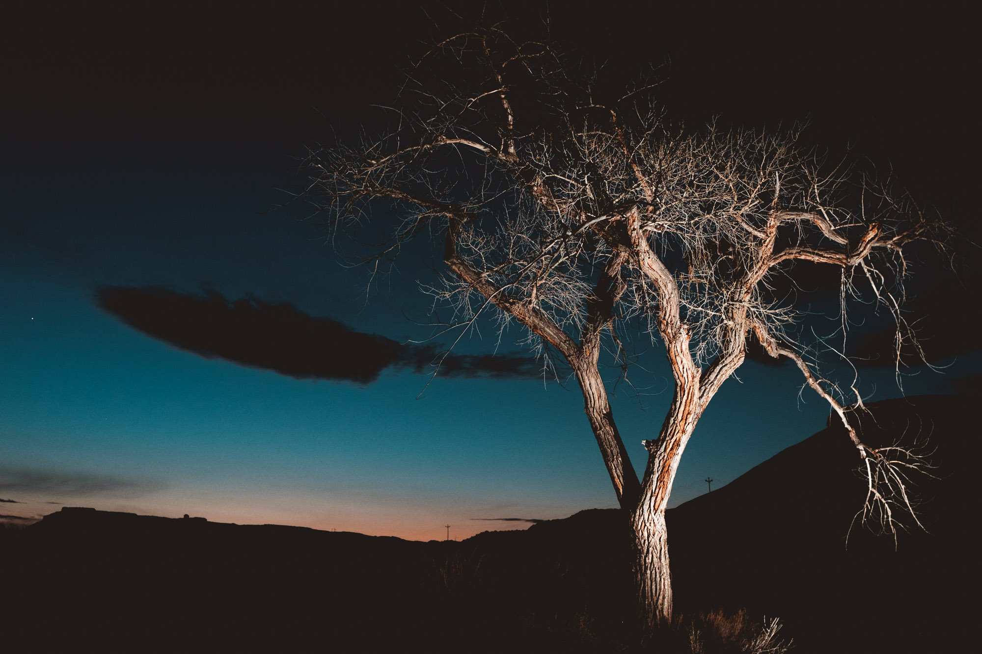 utah-tree-night