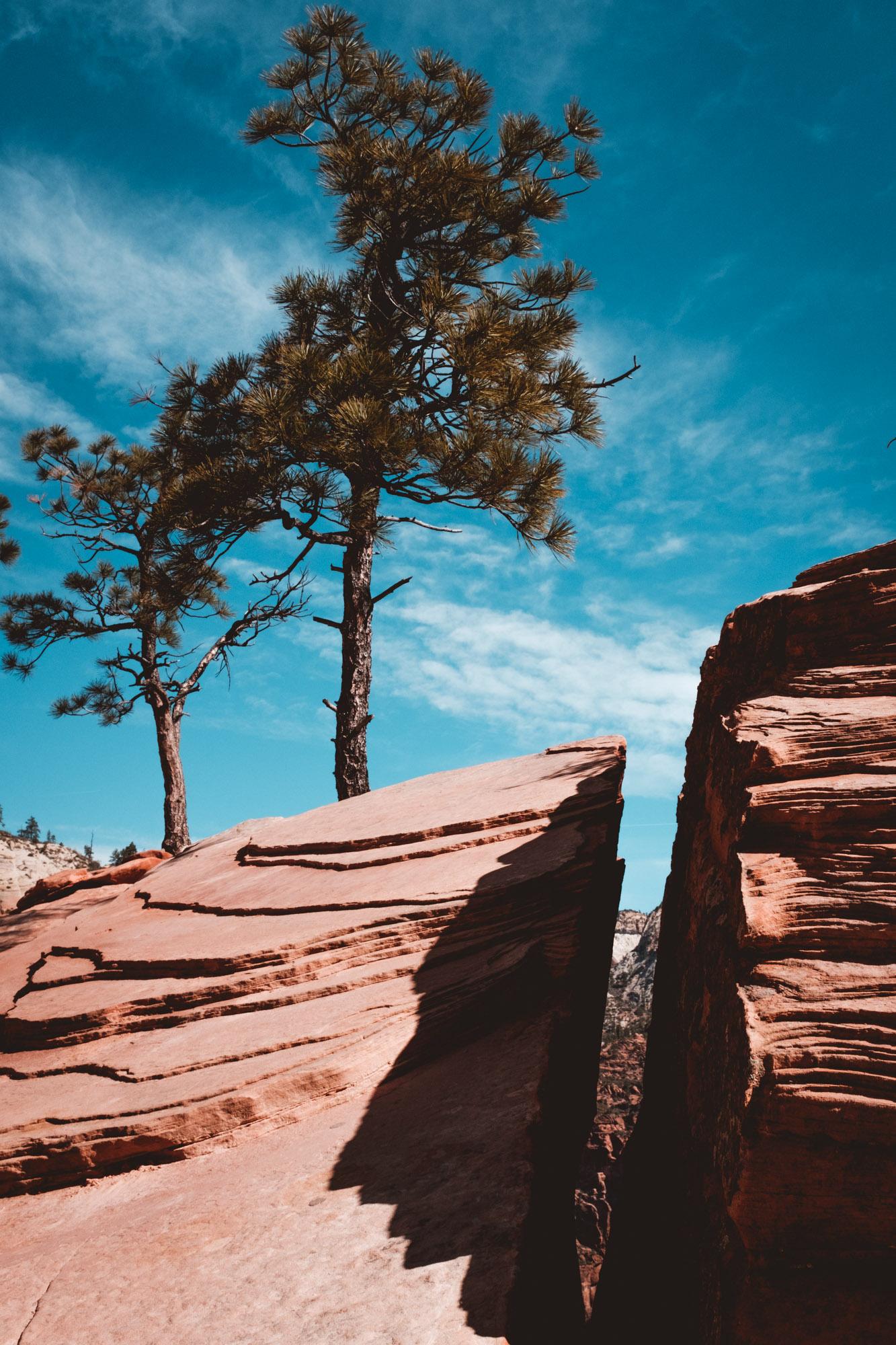 trees-rock-zion-national-park-utah