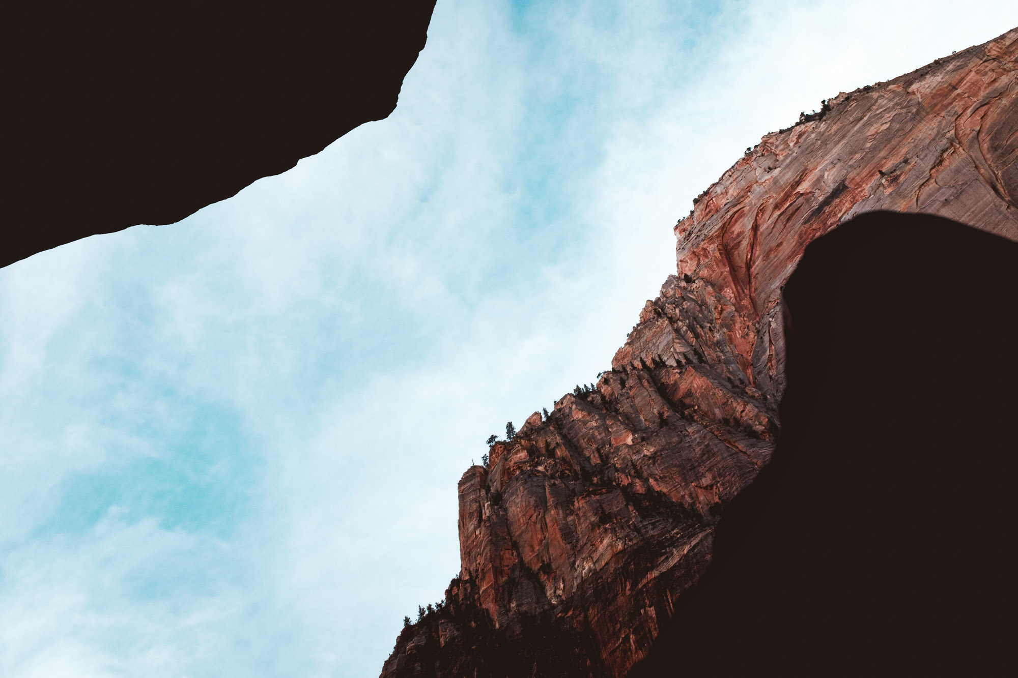 looking-up-zion-national-park-utah