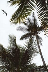 palm-trees-bird-great-stirrup-cay-bahamas