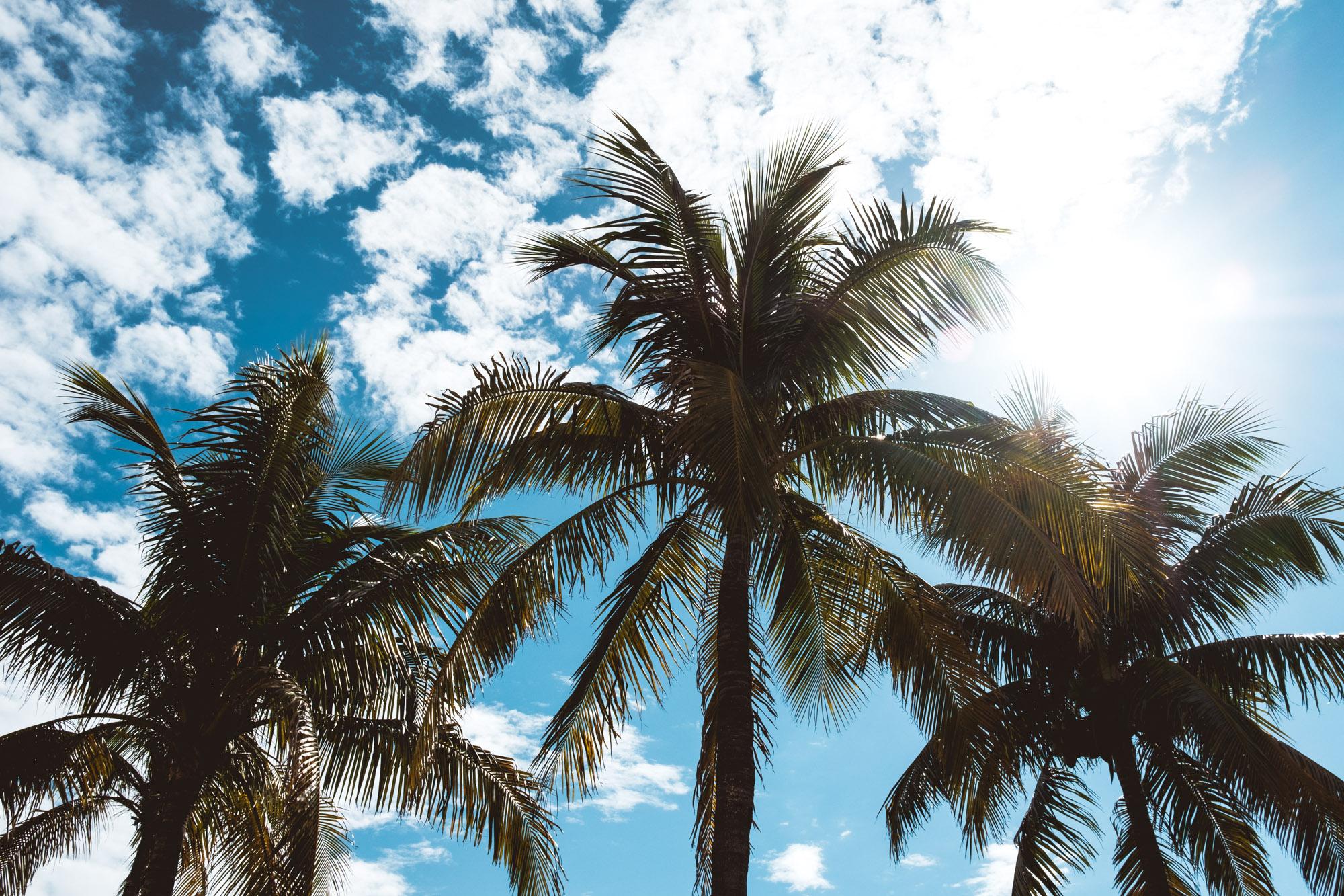 palm-trees-miami-florida